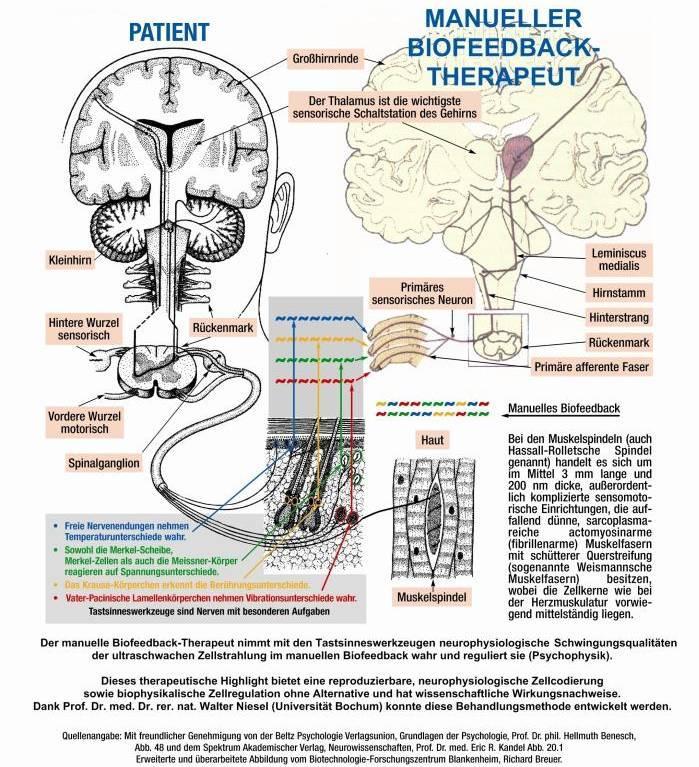 InfografikBiomeditec